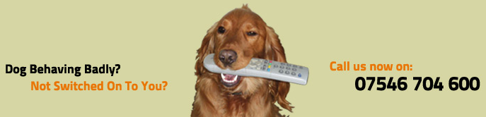 Dog Behaving Badly? Not Switched On To You? Call us now on: 07546704 600