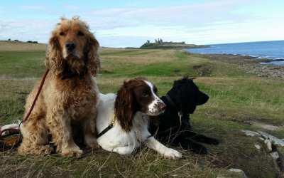 Holidays with Hounds